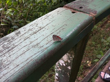 Iguassu Falls Vacation -- Butterflies